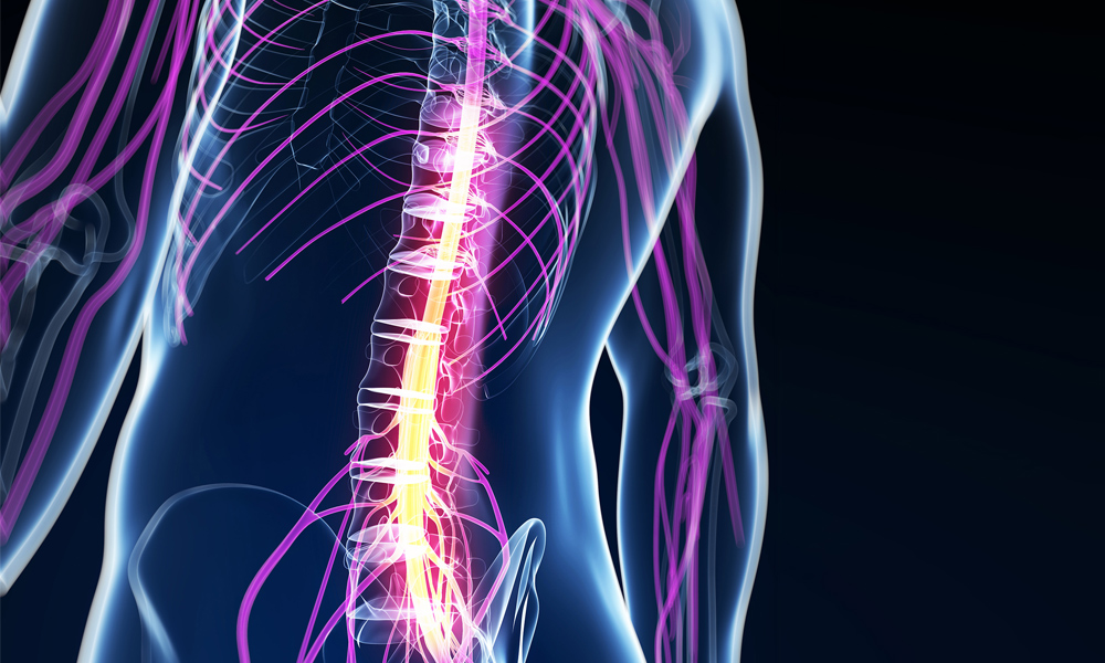 Ascending & Descending tracts of spinal cord | Medatrio